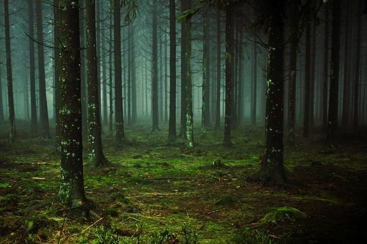 La Mensajera del Bosque de Maite Ochotorena