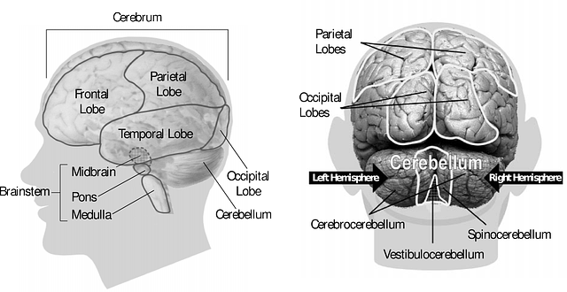 ¿Cómo percibe la lengua de signos nuestro cerebro?